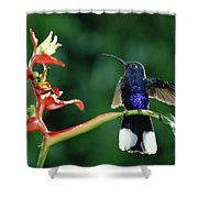 Violet Sabre-wing Hummingbird Shower Curtain