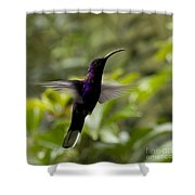 Violet Sabrewing At Cielito Sur Shower Curtain