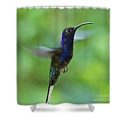 Violet Sabrewing Hummingbird Shower Curtain