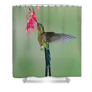 Violet-tailed Sylph Hummingbird Feeding Shower Curtain