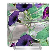 Violet Vine - Photopower 326 Shower Curtain