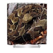 Viper Coil Shower Curtain
