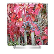 Virginia Creeper Fall Leaves And Berries Shower Curtain