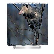 Virginia Opossum Shower Curtain