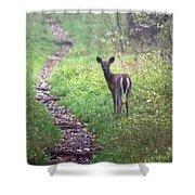 Virginia - Shenandoah National Park - White Tailed Deer Shower Curtain