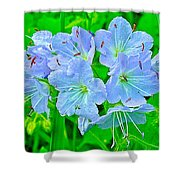 Virginia Waterleaf Near Alamo-michigan Shower Curtain