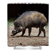Visayan Warty Pig Shower Curtain