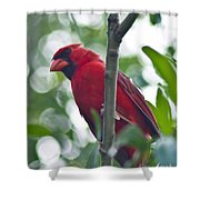 Vision In Red Shower Curtain