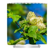 Vision Of Spring - Featured 3 Shower Curtain