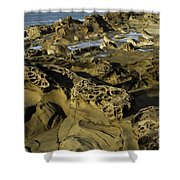 Visions Of Nature 4 Shower Curtain