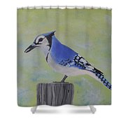 Visiting Bluejay Shower Curtain
