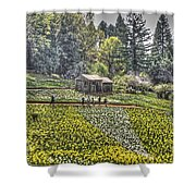 Visitors On Daffodil Hill Shower Curtain