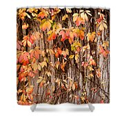 Vitaceae Family Ivy Wall Abstract Shower Curtain