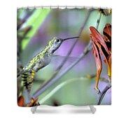 Vitality Of A Hummingbird Shower Curtain