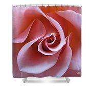 Vivacious Pink Rose 3 Shower Curtain