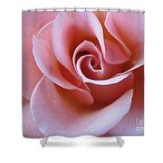 Vivacious Pink Rose 4 Shower Curtain