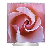 Vivacious Pink Rose 5 Shower Curtain