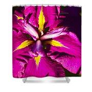 Vivid Iris Shower Curtain