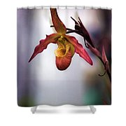 Vivid One Style Shower Curtain