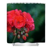 Vividly Red Geranium Shower Curtain