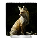 Vixen Fox   #4251 Shower Curtain
