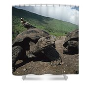 Volcan Alcedo Giant Tortoise Shower Curtain