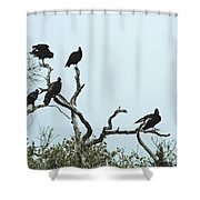 Vulture Club Shower Curtain