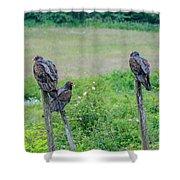 Vulture Fence Line 3 Shower Curtain