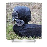 Vulture Love Shower Curtain