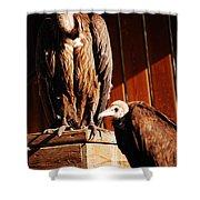 Vulture Male Shower Curtain