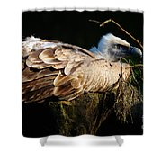Vulture Resting In The Sun Shower Curtain