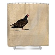 Vulture Road Shower Curtain
