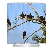 Vulture Tree Full Of Buzzards Shower Curtain