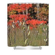 Wachusett Meadows 4 Shower Curtain