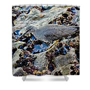 Wadering Tattler At Low Tide Shower Curtain