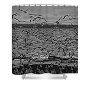 Wading Birds-black And White Shower Curtain