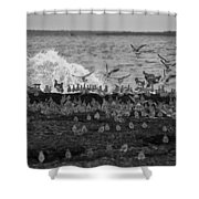 Wading Birds-black And White V2 Shower Curtain
