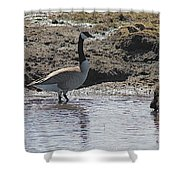 Wading Goose Shower Curtain