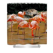 Waikiki Flamingos Shower Curtain