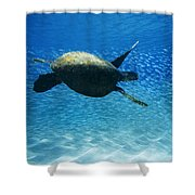 Waimea Turtle Shower Curtain