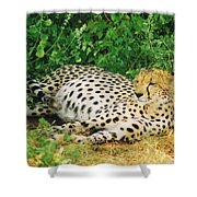 Waiting For Baby Cheetahs Shower Curtain