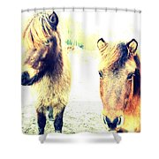 Eager Horses Waiting For Their Simple Dinner Shower Curtain