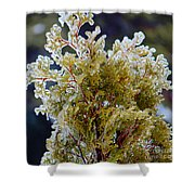 Waiting For Spring - Ice Storm - Closeup Shower Curtain