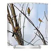 Waiting Game  Shower Curtain