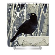 Waiting Grackle Shower Curtain
