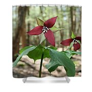 Wake Robin Pair  Shower Curtain