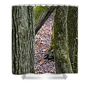 Walk Among The Trees Shower Curtain
