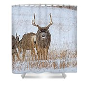 Walk Away Shower Curtain