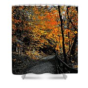 Walk In Golden Fall Shower Curtain