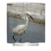 Walk On The Wild Side Shower Curtain